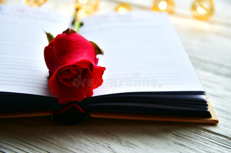 Red rose on the book spread. St. Valentine`s Day background royalty free stock images
