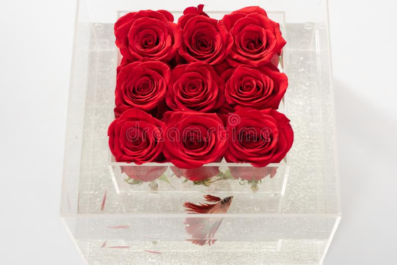 Red rose bouquet in box. Aquarium with fish and roses. Flower shop. Floral design. Love and passion. Valentines day. Present. They are as beautiful as you stock photography