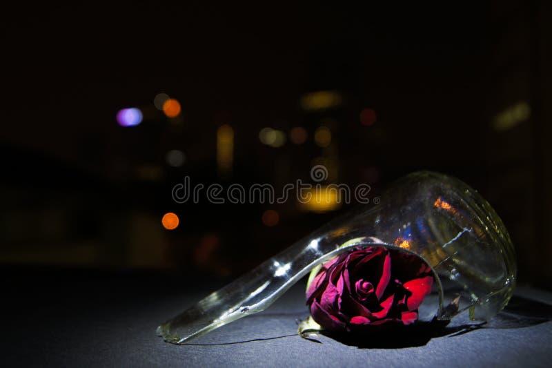 Red Rose Broken Glass Night Bokeh stock image