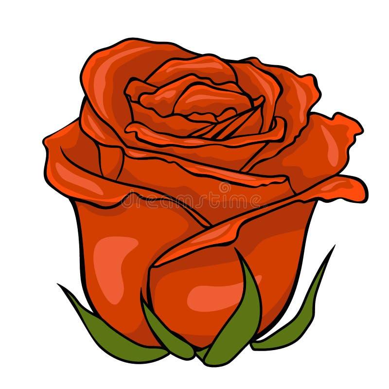 Red rose bud. flower on white background. stock illustration