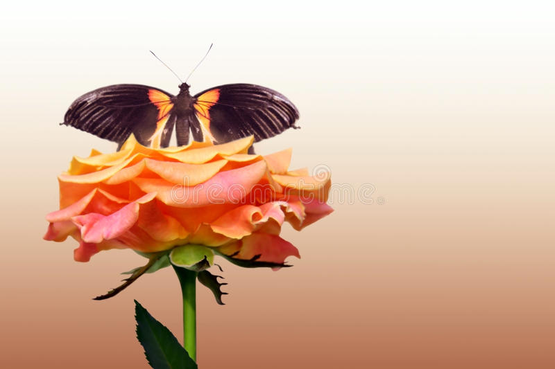 Red rose and butterfly royalty free stock photography