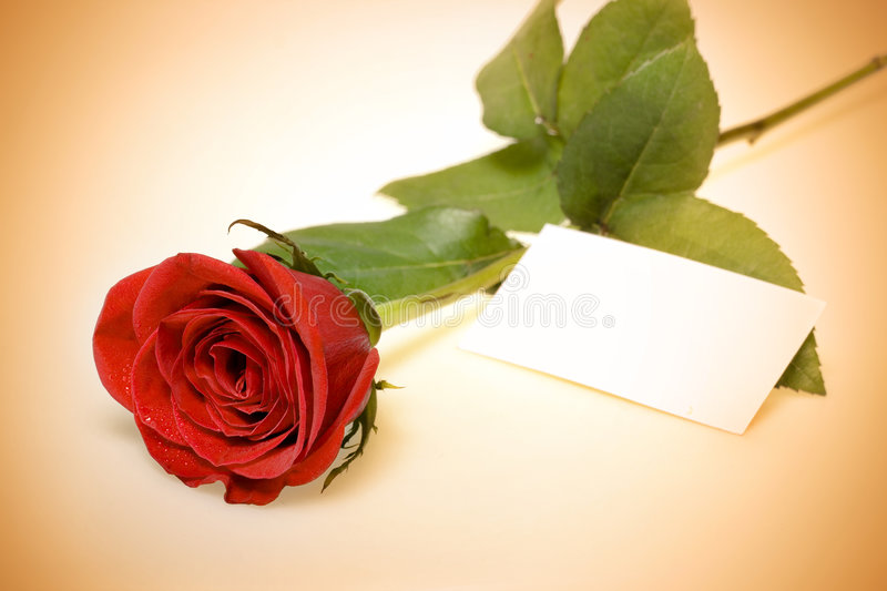 Red rose with card stock photography