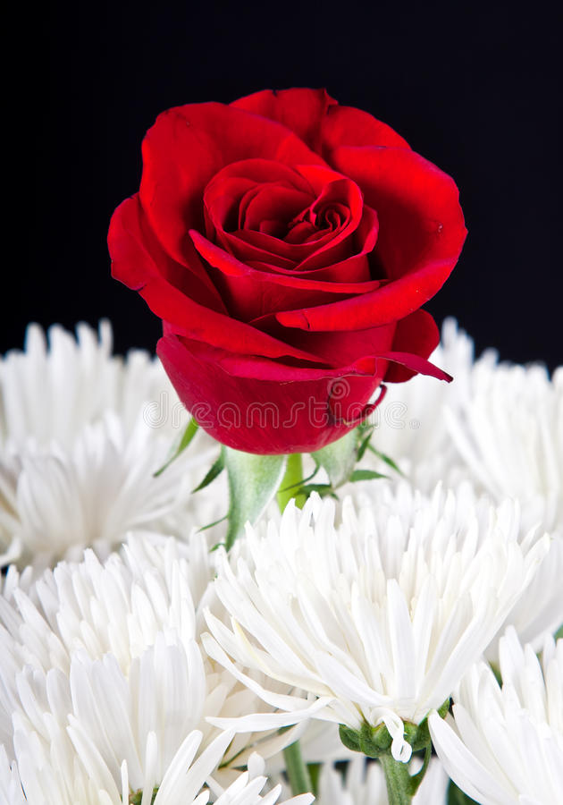 Download Red Rose Contrast In White Bouqet Stock Photo - Image: 25084084