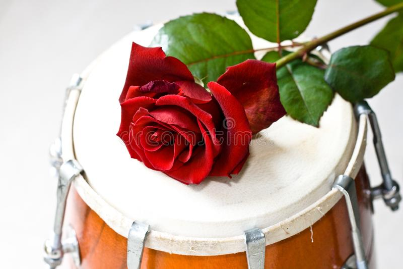 Download Red Rose on a Dhol drum stock image. Image of entertaining - 8512973