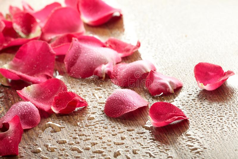 Download Red rose, drop water stock image. Image of romantic, flower - 17035403