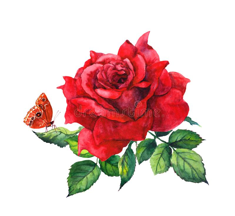Red rose flower and butterfly. Botanical watercolor illustration stock illustration
