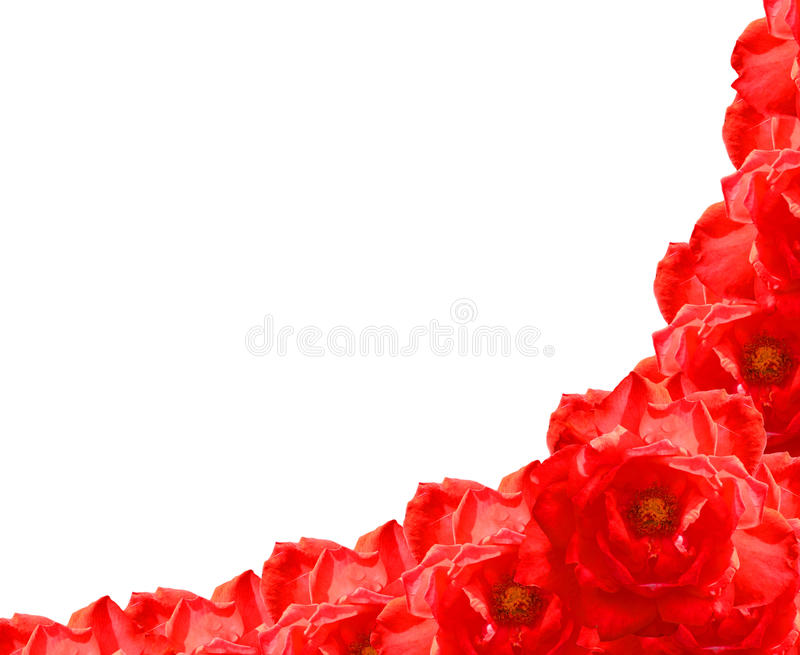 Download Red rose flower frame stock image. Image of anniversary - 26607645