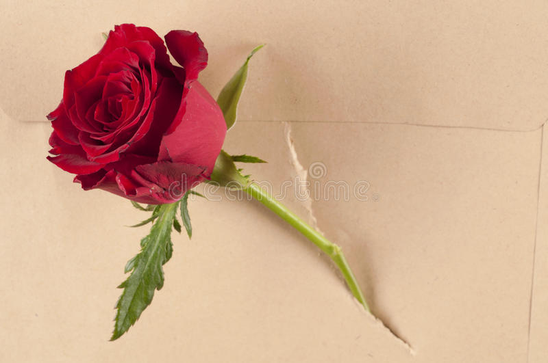 Red Rose Flower In A Torn Paper Envelope. Stock Photo