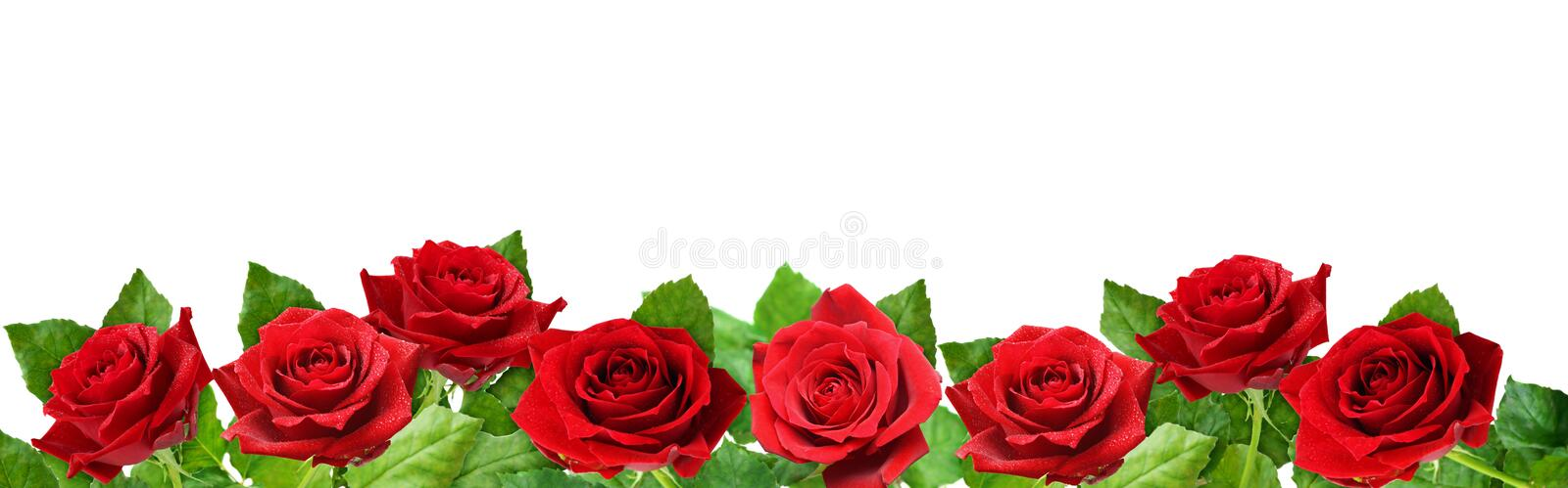 Red rose flowers border royalty free stock photo