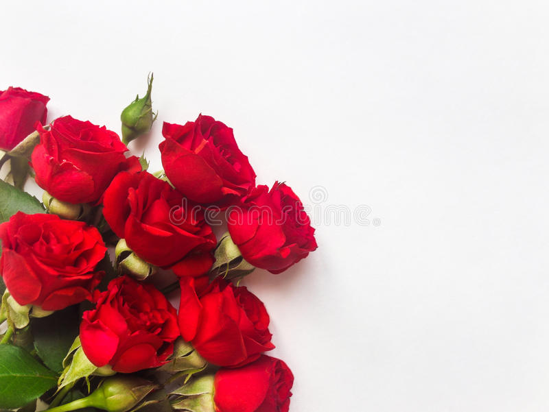 Red Rose Flowers Isolated On White Background Flat Lay Top View - Best of flower powerpoint background concept