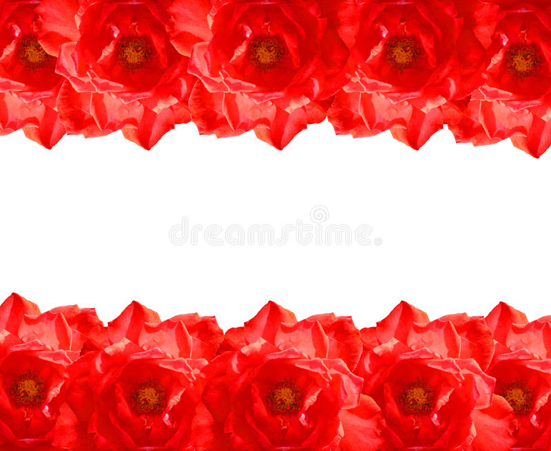 The Red Rose Frame Royalty Free Stock Image