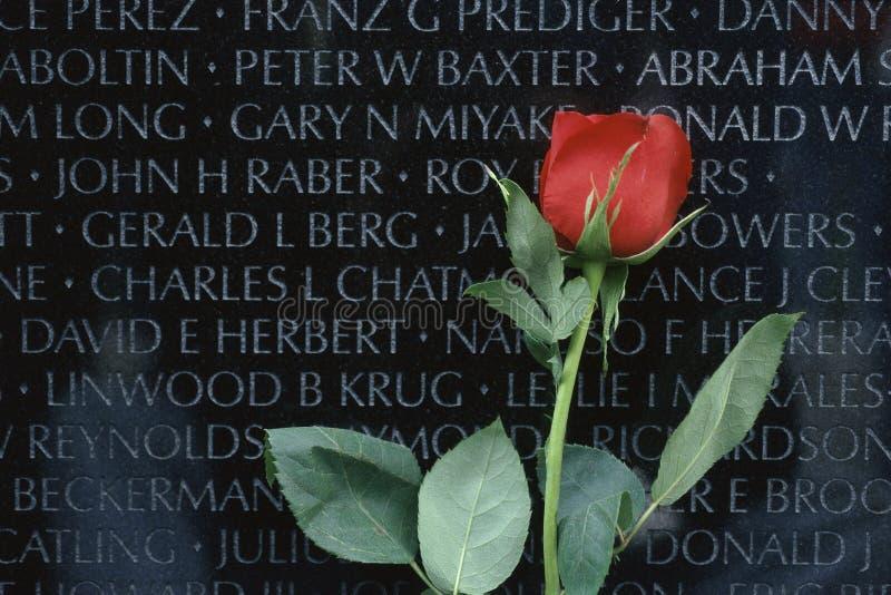 Red rose in front of Vietnam Veterans Memorial stock photography