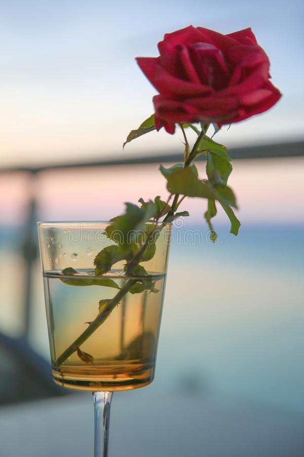 Red rose in glass over bokeh sunset over blue sea. Vacation post card stock image