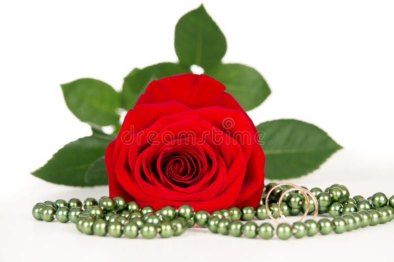 Download Red rose with gold rings stock photo. Image of fresh - 28563036