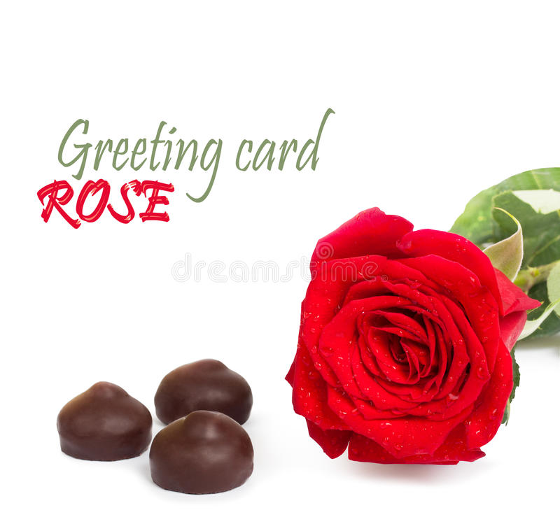 Red rose with green leaves and chocolate, isolated royalty free stock image