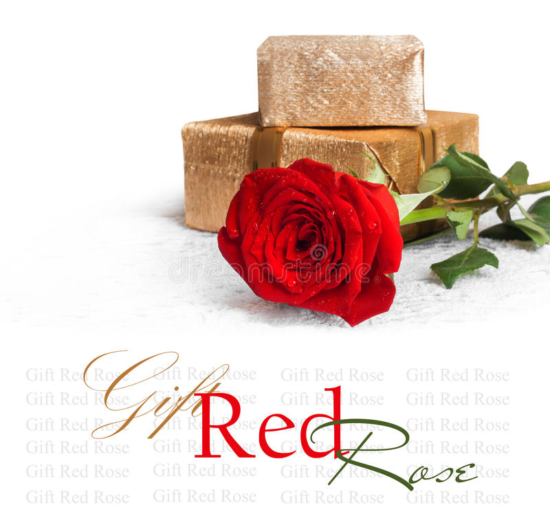 Red rose with green leaves and water drops with gift stock image