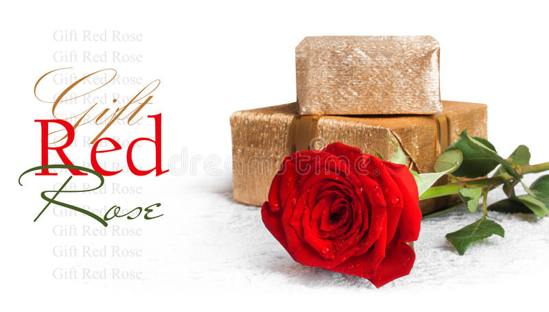 Red rose with green leaves and water drops with gift stock photos