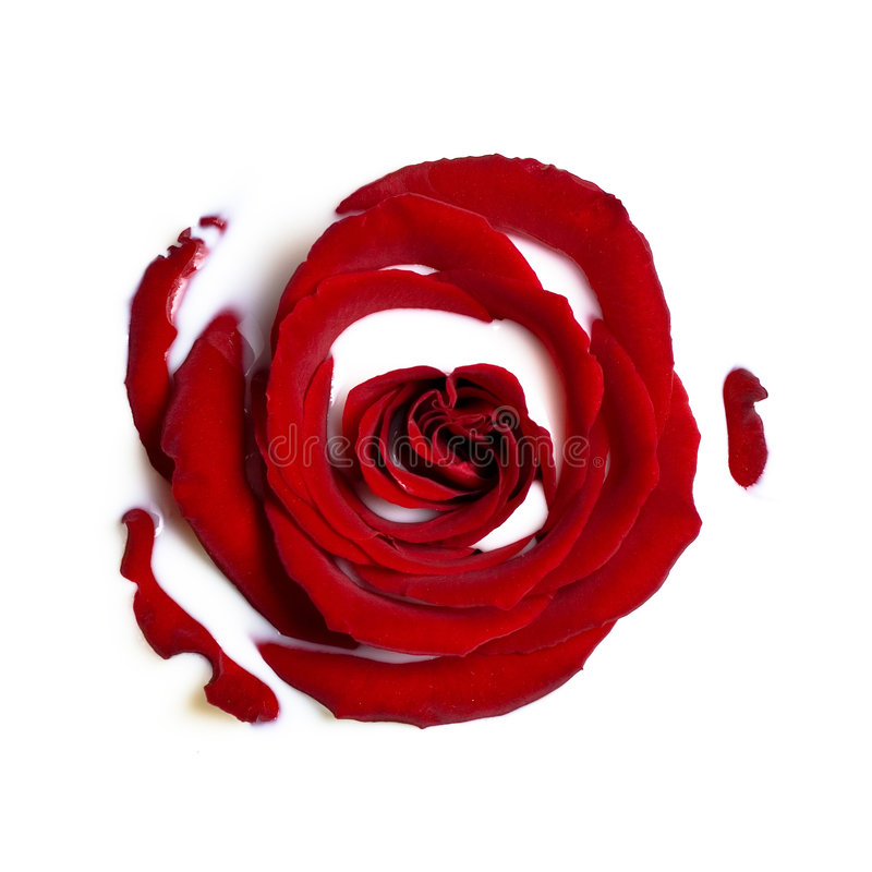 Free Red Rose In The Milk Stock Images - 2019484