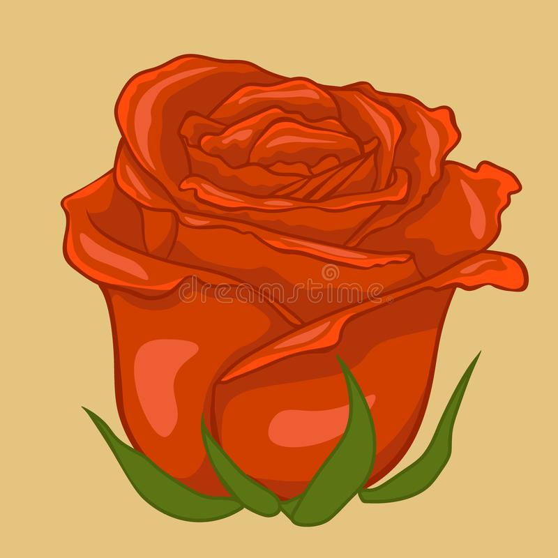 Red rose. Isolated flower on creamy background. Isolated rose vector illustration