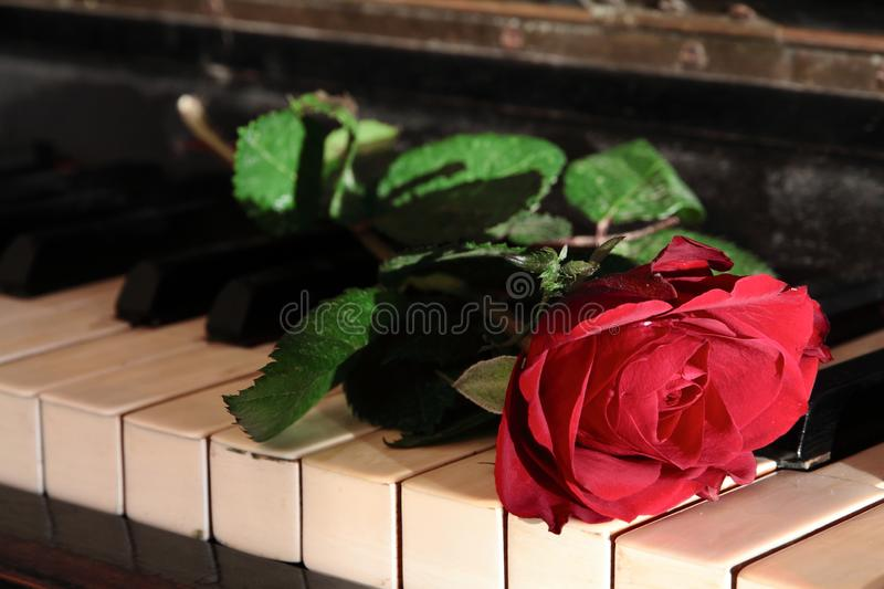 Red rose and the piano royalty free stock images