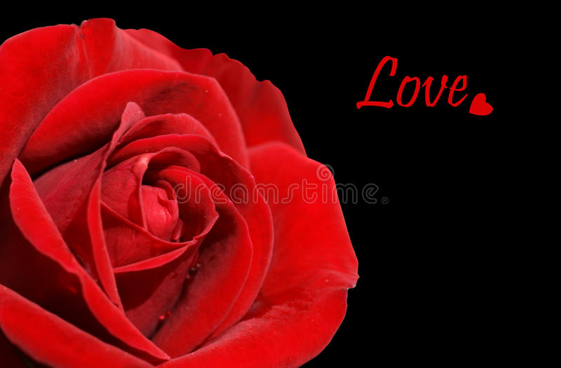 Download Red Rose And Love On Black Royalty Free Stock Image - Image: 20530416