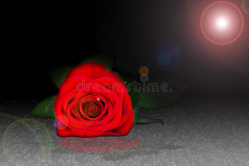 Red rose lying in the dew. In the dark stock illustration
