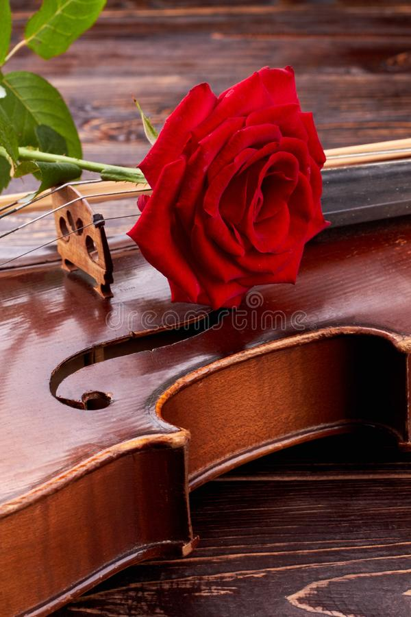 Red rose on old violin, vertical image. royalty free stock images