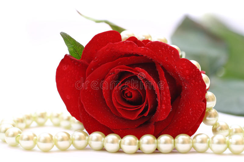 Red rose and pearls stock photos