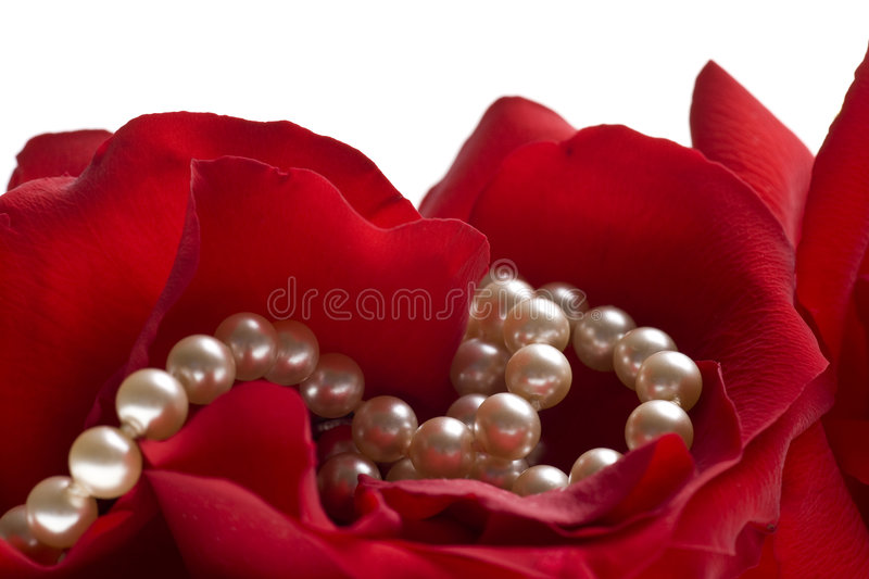 Red rose with pearls isolated on white background royalty free stock images