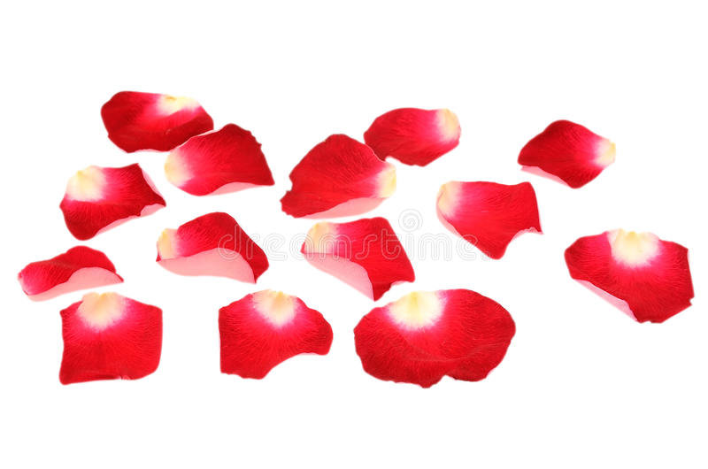 Download Red Rose Petals Stock Images - Image: 24457274