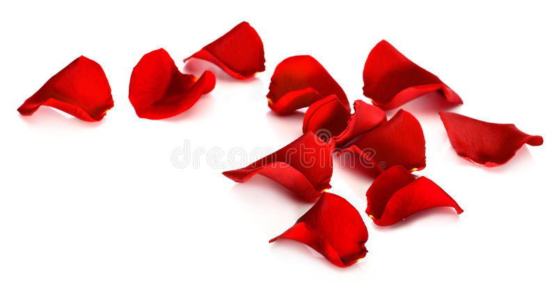Red rose petals. On a white background