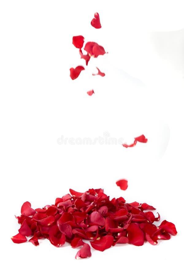 Free Red Rose Petals Royalty Free Stock Photos - 9232028
