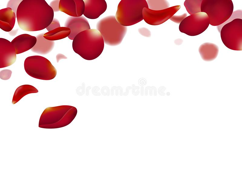 Red rose petals falling on white background vector illustration vector illustration