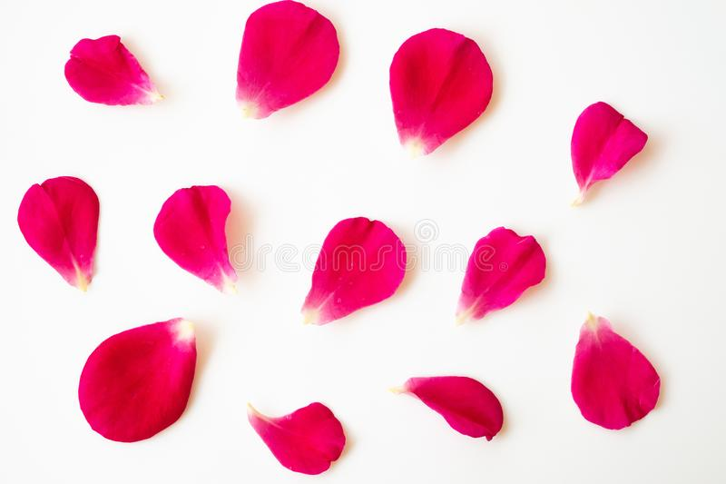 Red rose petals on white stock image