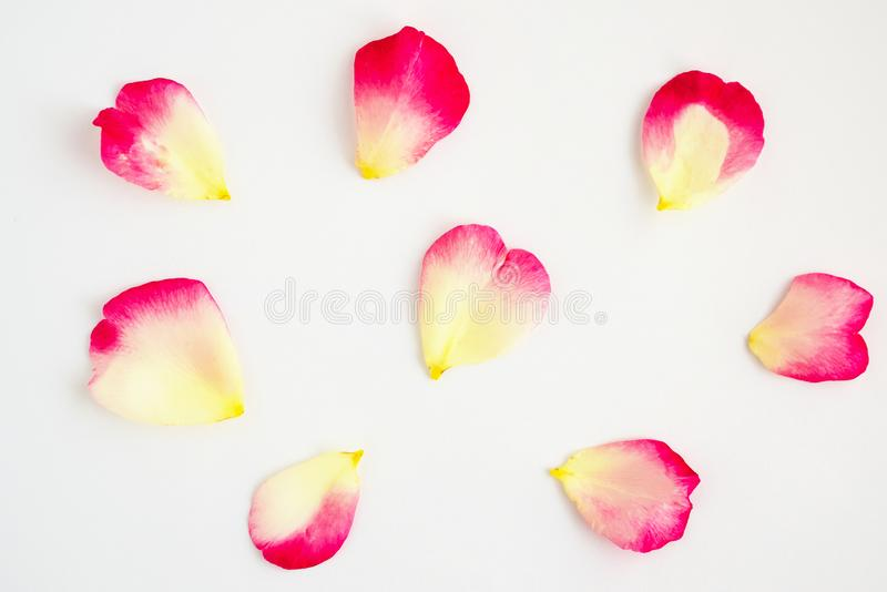 Red rose petals on white royalty free stock photos