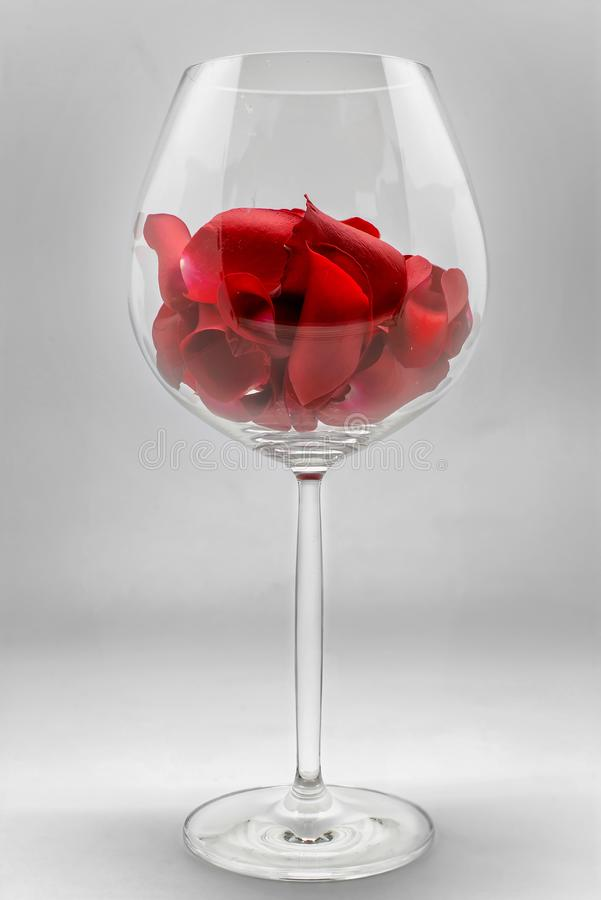 Red rose petals in wine glass on grey background. Romantic happy valentines day greeting card, women`s day, wedding invitation stock image