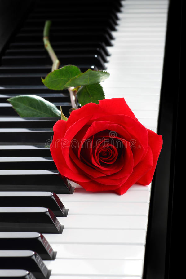 Red rose on piano. Red rose on black piano
