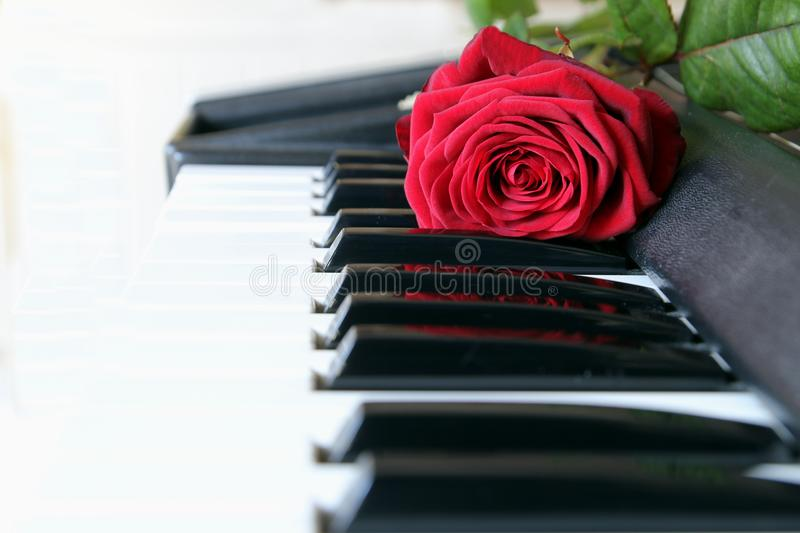 Red rose on piano keyboard. Love song concept, romantic music stock photos