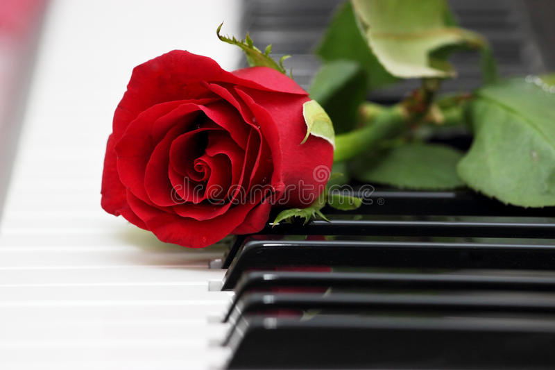 Red Rose On Piano, Love And Music Stock Photo - Image of