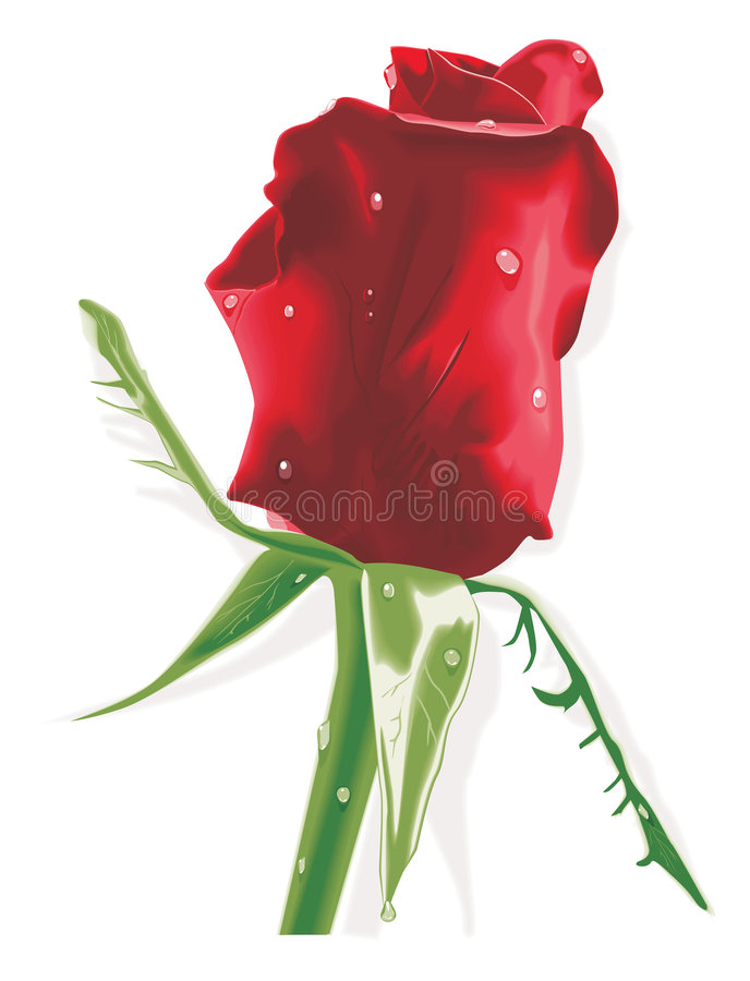 Red rose with raindrops stock illustration