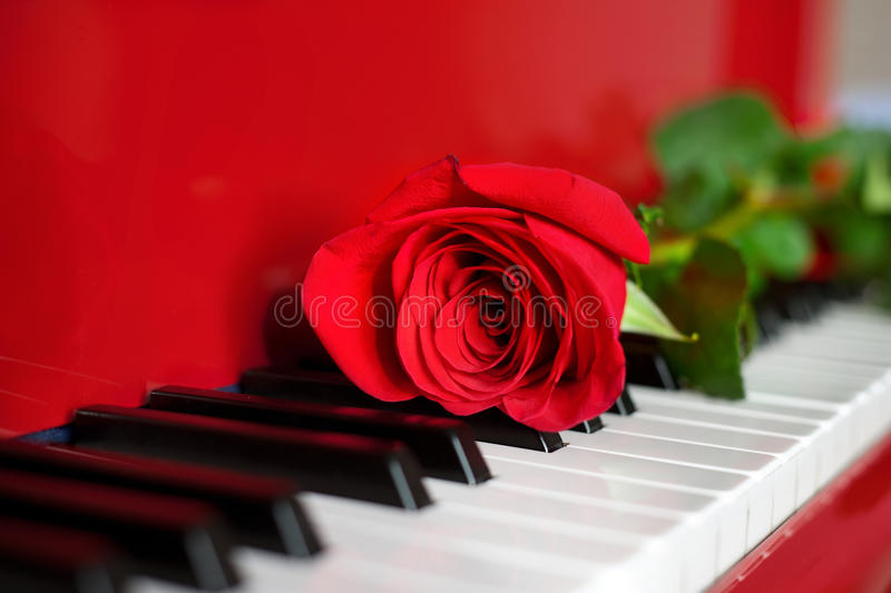 Red Rose On Red Grand Piano Keys Stock Images