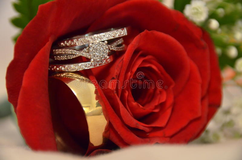 on wedding lying en red rose is photo gold pixabay rings free
