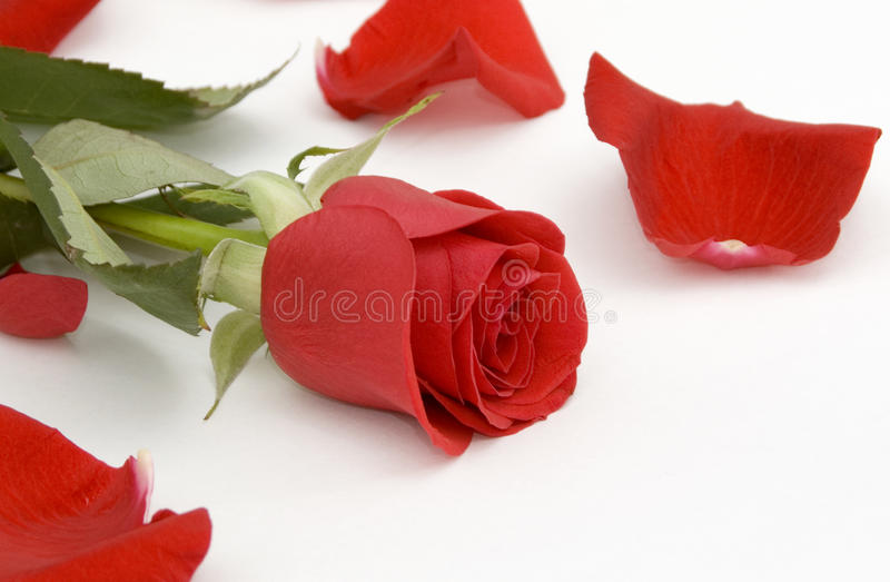 Download Red Rose And Rose Petals Royalty Free Stock Image - Image: 27032906