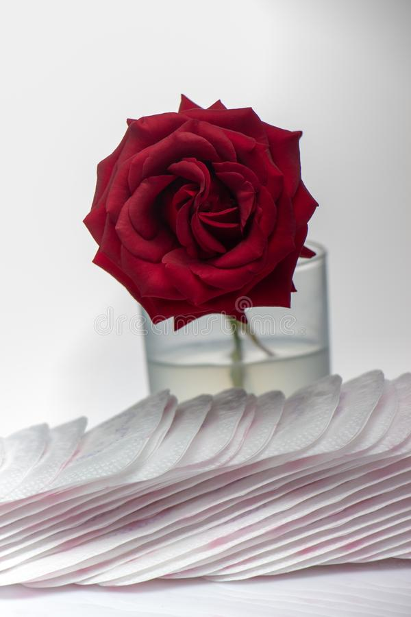 Red rose and sanitary pads. The concept of purity and freshness stock photo