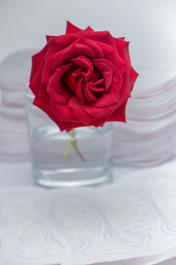 Red rose and sanitary pads. The concept of purity and freshness stock images