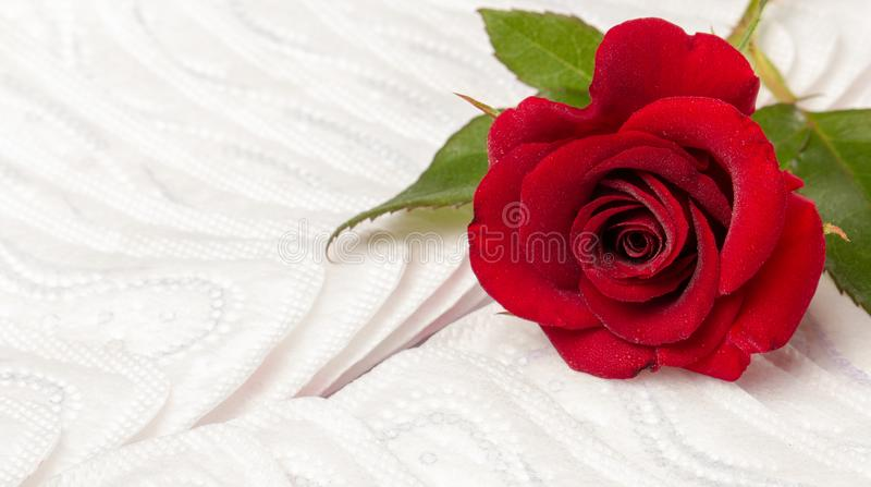 Red rose and sanitary pads. The concept of purity and freshness royalty free stock images