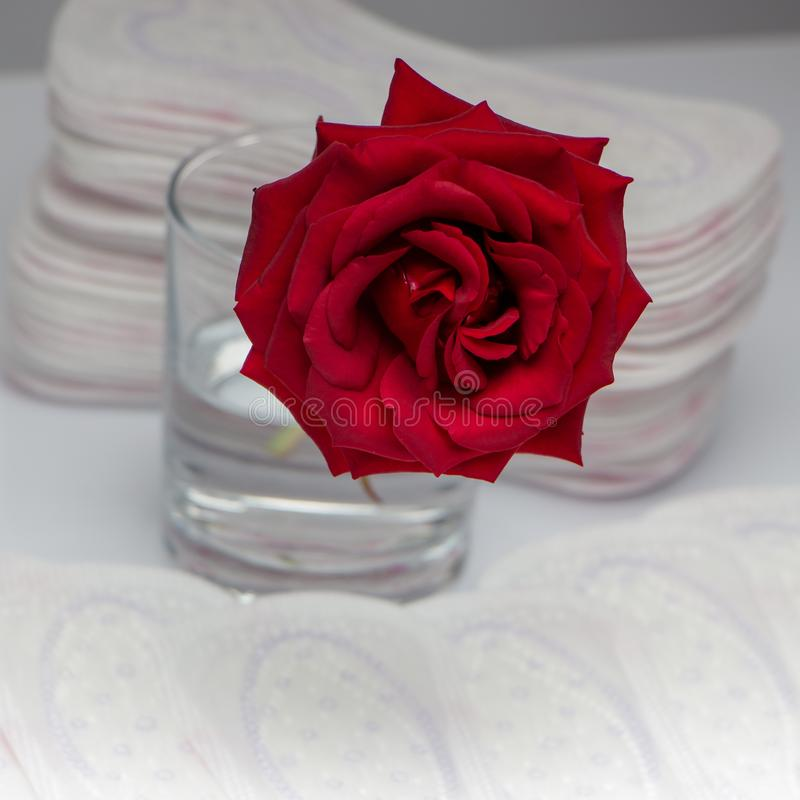 Red rose and sanitary pads. The concept of purity and freshness stock photos