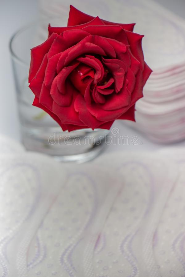 Red rose and sanitary pads. The concept of purity and freshness stock photography