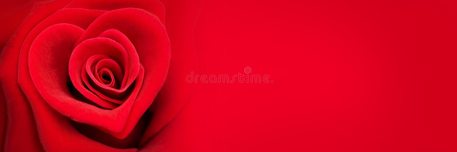 Red rose in the shape of a heart, valentines day banner stock photography