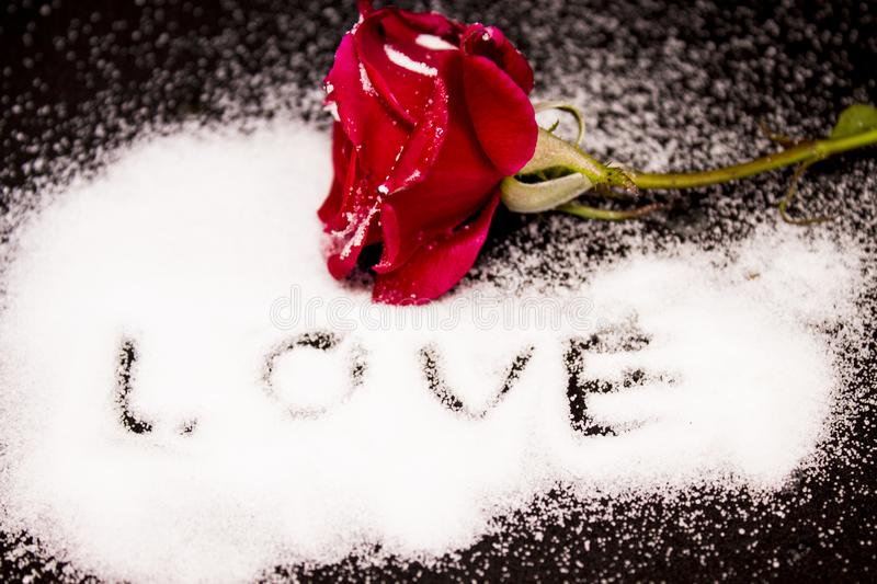 Red Rose in snow on a black background Love stock images